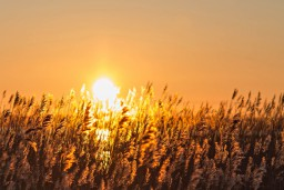 """Aicina uz Vairas un Māra Viģeļu dzintara rotu un  Līgas Evaldsones fotogrāfiju izstādes """"Saule i tuvāk"""" atklāšanu"""