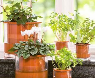 Istabas augi veiksmei, mīlestībai, materiālajai labklājībai un biznesa attīstībai