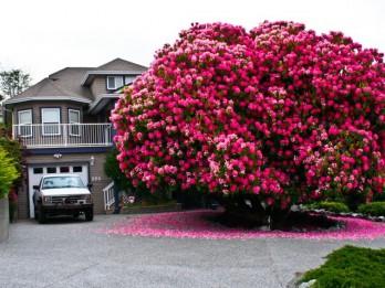 Foto: Pasaules iespaidīgākie koki, kas pārsteidz un raisa apbrīnu