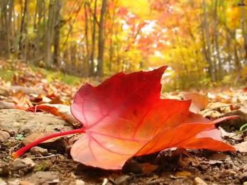 Ieskaties krāsainajā rudenī un iemīli to