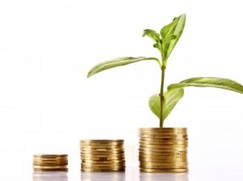 Istabas augi, kas jāaudzē, lai veicinātu labklājību
