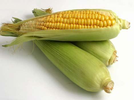 Ko der zināt par kukurūzu
