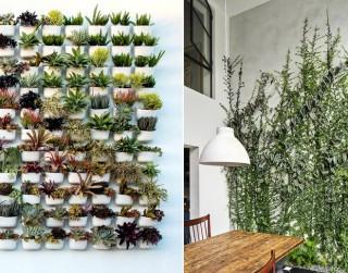 Fen šui un istabas augi. Kā tie ietekmē cilvēku