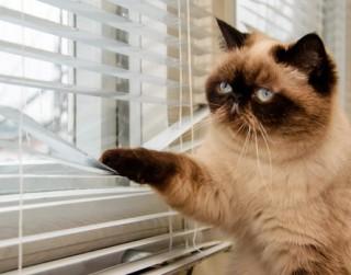 Ja kaķis jāatstāj mājās viens
