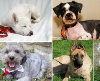 20 suņi, kurus izdevās glābt. Šausminoši stāsti ar laimīgām beigām